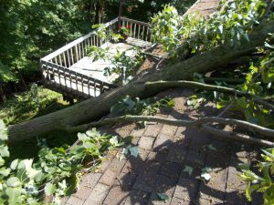 Tree Wind Damage