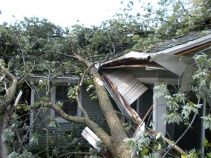 Tree fell on house. Insurance Restoration